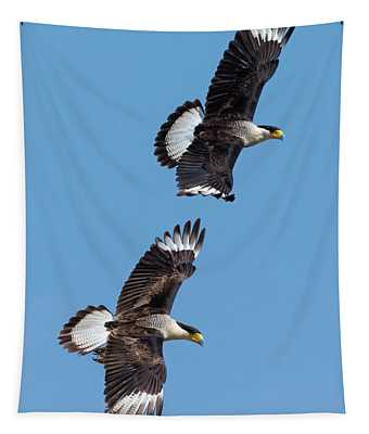 Flying Caracaras Tapestry