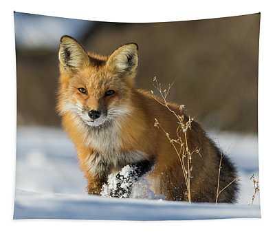 Fox Hunting In Winter Tapestry