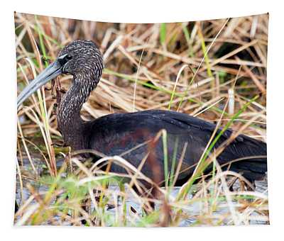 Glossy Ibis 123015 Tapestry
