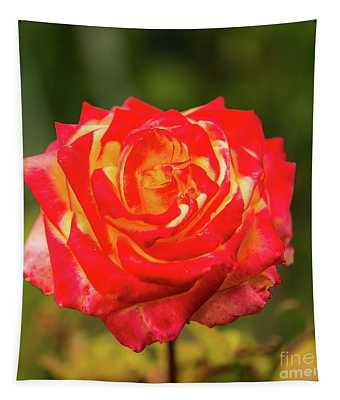 Glowing Red And Yellow Rose Blossom In Vibrant Colors. Tapestry