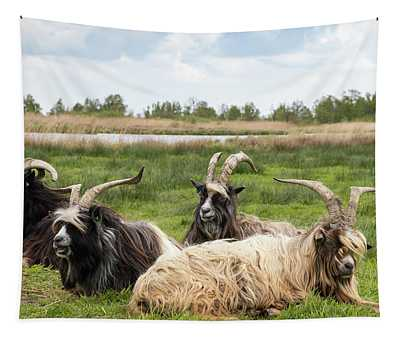 Tapestry featuring the photograph Goats  by Anjo Ten Kate