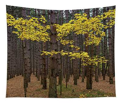 Gold Among The Pines 2 Tapestry