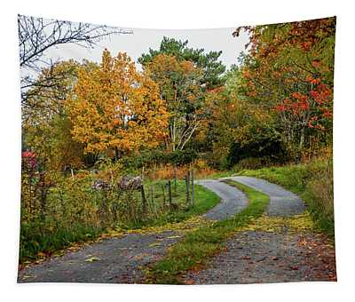 Gravelled Road In Autumn Tapestry