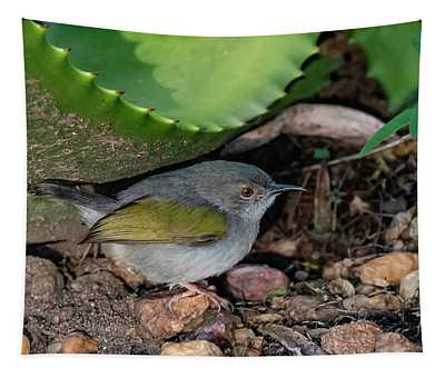 Gray-backed Camaroptera Tapestry