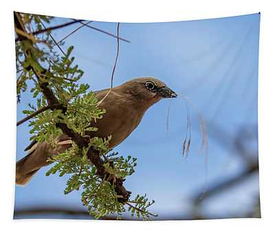 Gray-headed Social Weaver Tapestry