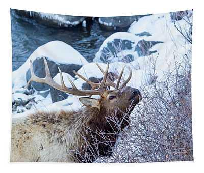 Grazing Elk Tapestry