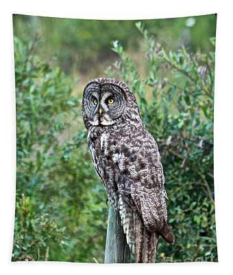 Great Gray Owl Tapestry