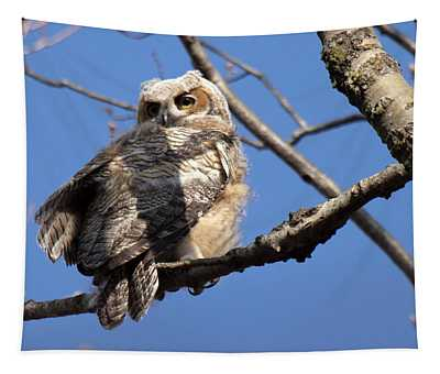 Great Horned Owlet 42915 Tapestry