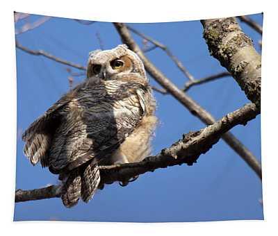 Great Horned Owlet 42915 Tapestry