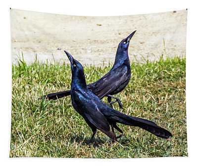 Great-tailed Grackles Looking Up Tapestry