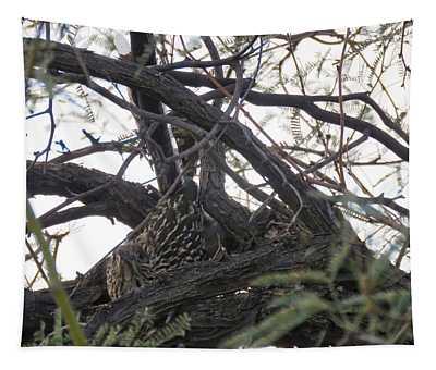 Greater Roadrunner Nesting In Mesquite Tree Tapestry