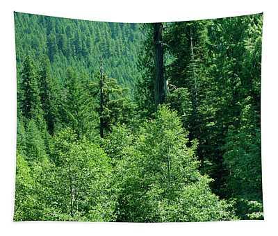 Green Conifer Forest On Steep Hillside  Tapestry