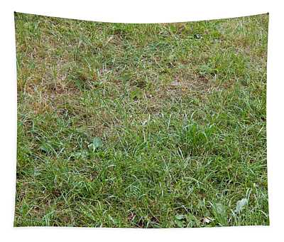 Green Grass Texture In The Park Tapestry