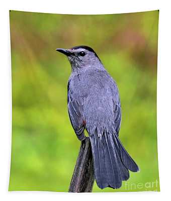 Grey Catbird Tapestry