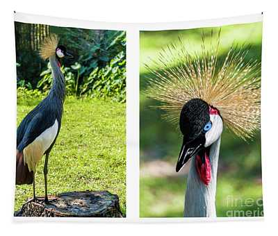 Grey Crowned Crane Gulf Shores Al Collage 8 Diptych Tapestry