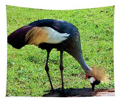 Gray Crowned Crane Gulf Shores F13119b Tapestry