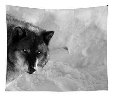 Grey Wolf Bw Tapestry