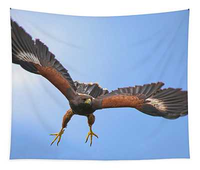Harris Hawk Tapestry