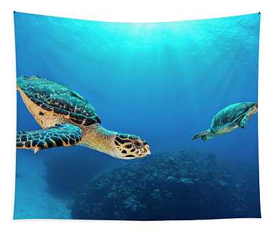 Hawksbill Turtle Pair Circling, Seven Mile Beach, Cayman Islands Tapestry
