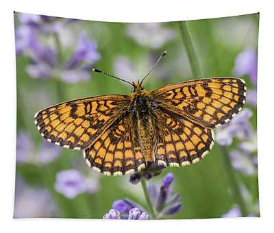 Heath Fritillary On The Lavender Tapestry