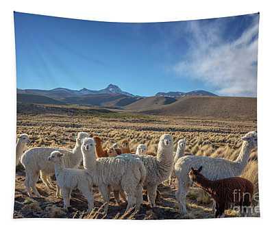 Herd Of Alpacas, Bolivia Tapestry