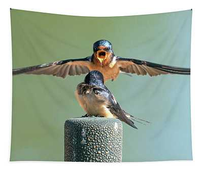 Hey, Babe, Let's Rock N Roll.  Barn Swallows Tapestry