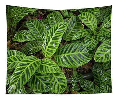 High Angle View Of Zebra Plant, Costa Tapestry
