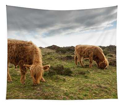 Highland Cattle Feeding At Baslow Edge Tapestry