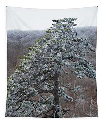 Hoarfrost Gathers Tapestry