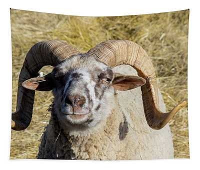 Hog Island Sheep 1 Tapestry