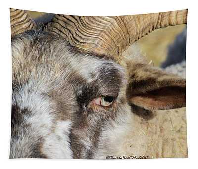Hog Island Sheep 3 Tapestry