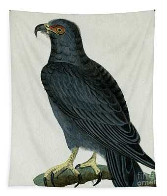 Hook-billed Kite, 1830 Tinted Engraving For Complete Works Of French Naturalist Comte De Buffon - 3 Tapestry
