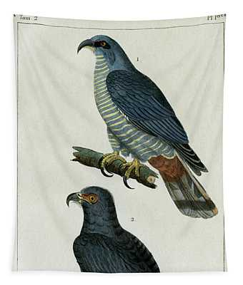 Hook-billed Kites, 1830 Tinted Engraving For Complete Works Of French Naturalist Comte De Buffon - 1 Tapestry