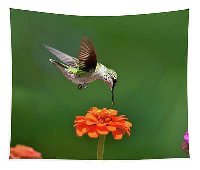 Hummingbird Bullseye Tapestry