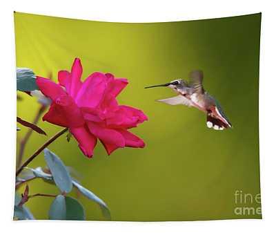 Hummingbird Exploring Red Tapestry