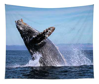Humpback Breaching - 01 Tapestry