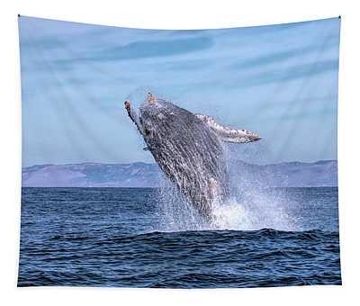 Humpback Breaching - 02 Tapestry