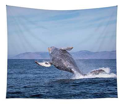 Humpback Breaching - 03 Tapestry