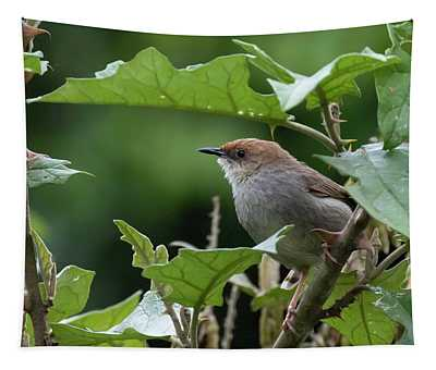 Hunter's Cisticola Tapestry