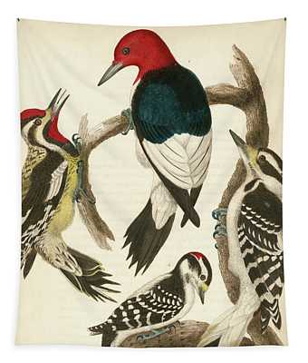 1. Red-headed Woodpecker. 2. Yellow-bellied Woodpecker. 3. Hairy Woodpecker. 4. Downy Woodpecker. Tapestry