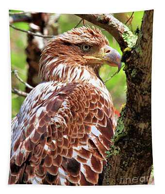 Immature Eagle Tapestry