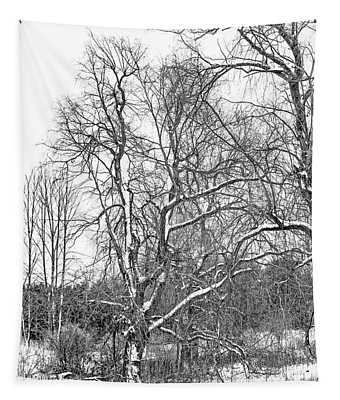 In Praise Of Willows 4 Bw Tapestry