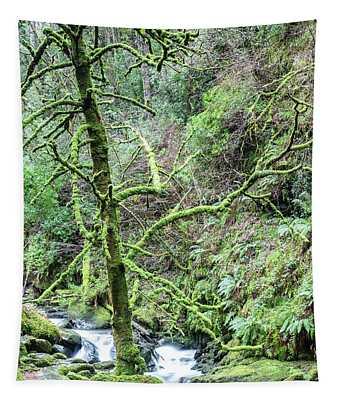 Ireland Killarney National Park River  Tapestry