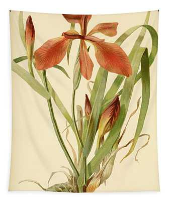 Iris Cuprea Copper Iris.  Tapestry