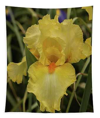 Iris In Yellow Tapestry