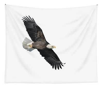 Isolated Bald Eagle 2018-2 Tapestry