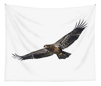 Isolated Bald Eagle 2018-3 Tapestry