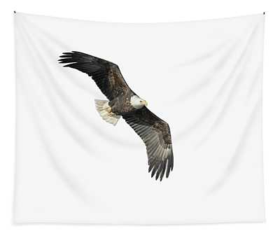 Isolated Bald Eagle 2018-4 Tapestry