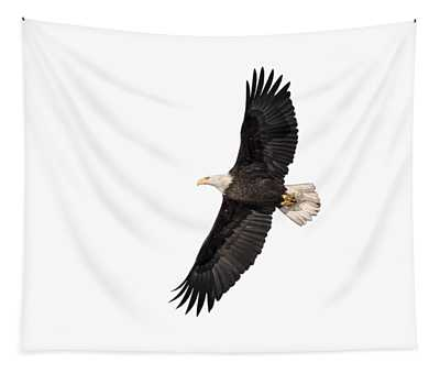 Isolated Bald Eagle 2018-5 Tapestry