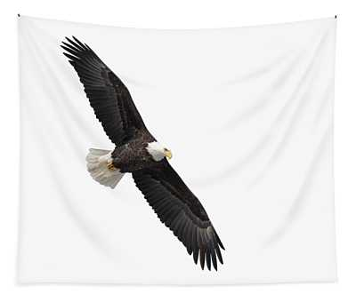 Isolated Bald Eagle 2019-1 Tapestry